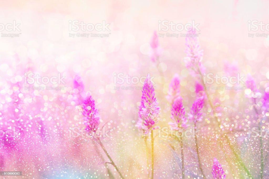 Blumenwiese im Frühling Hintergrund mit Sonnenlicht weich Romantik – Foto
