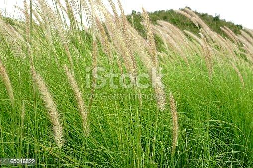 Lake Mead, Rainforest, Agricultural Field, Farm, Formal Garden