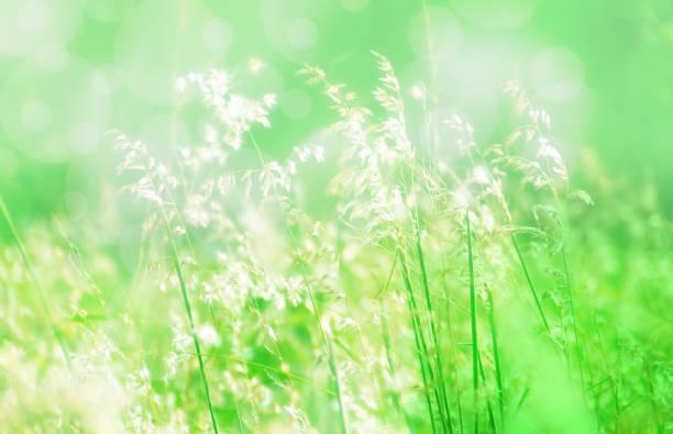grass flower soft focus spring background stock photo