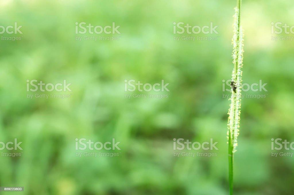 grass flower with green bokeh light  fresh nature background stock photo