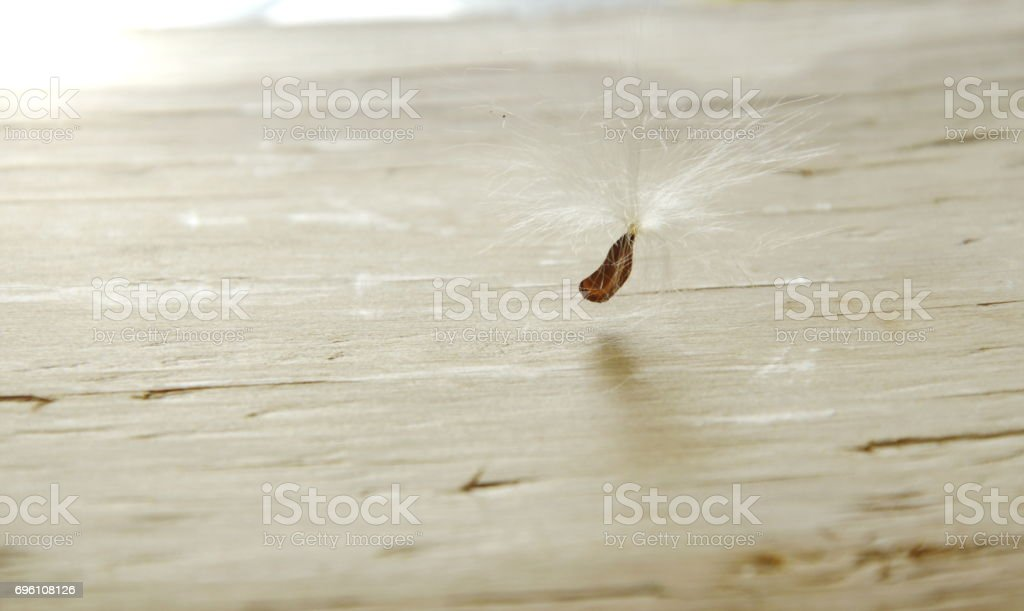 grass flowering seed blow and falling stock photo