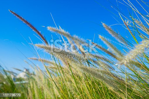 field with grass flowers and sunny blue sky background.