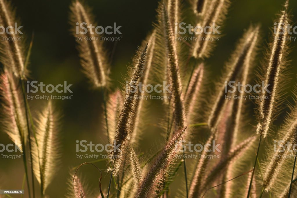 grass flowers field stock photo