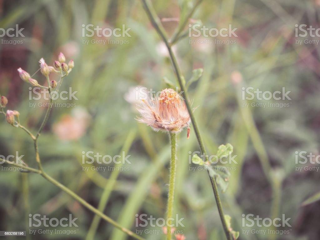Grass flowers Lizenzfreies stock-foto