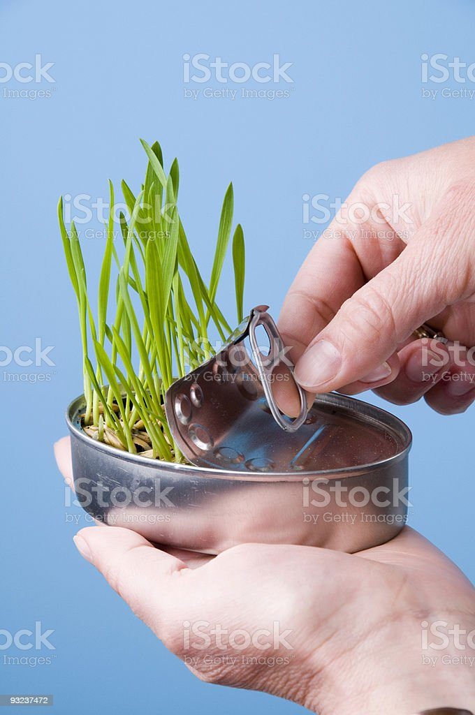 Grass from can royalty-free stock photo