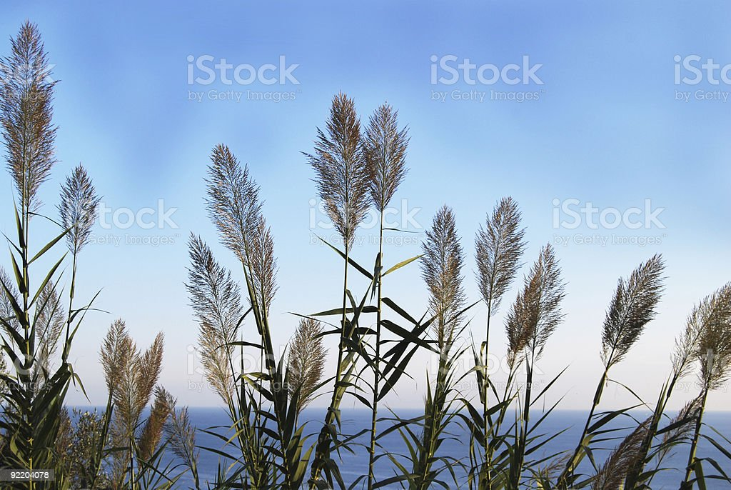 Grass Fronds Background royalty-free stock photo