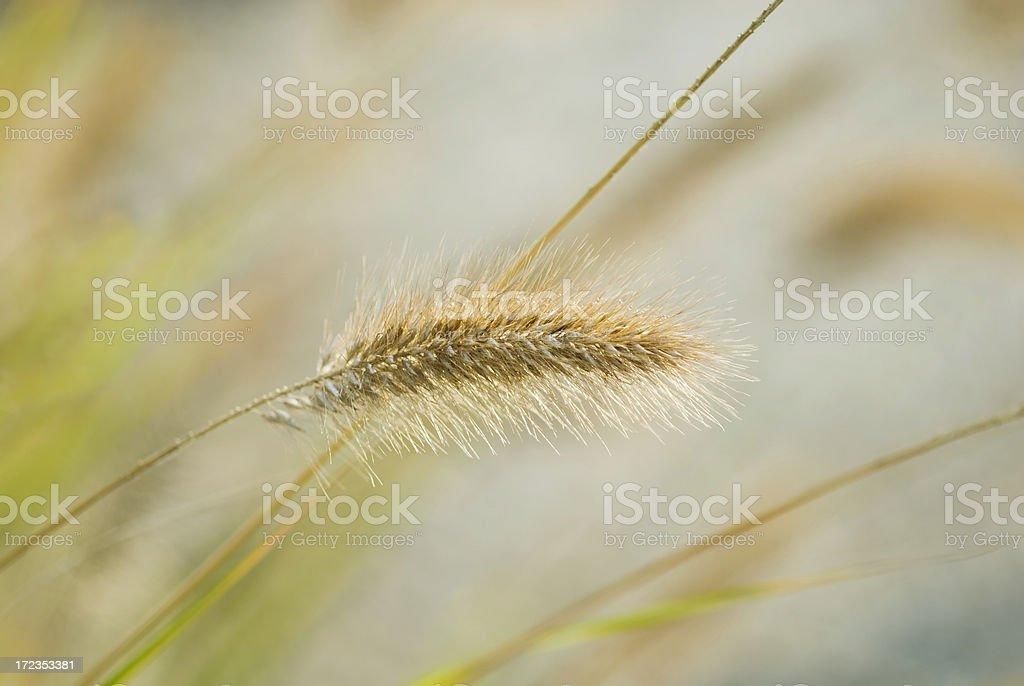 Grass Geometry royalty-free stock photo