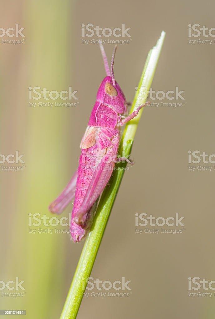 Grass grasshopper stock photo