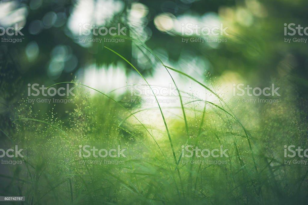 Grass Green Nahaufnahme im Meadow Garden - Lizenzfrei Abstrakt Stock-Foto