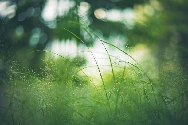 Hierba verde Close-up In Meadow al jardín - foto de stock