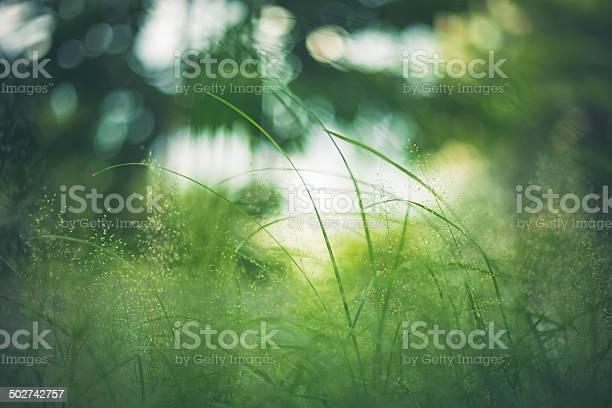 Grass Green Nahaufnahme Im Meadow Garden Stockfoto und mehr Bilder von Abstrakt