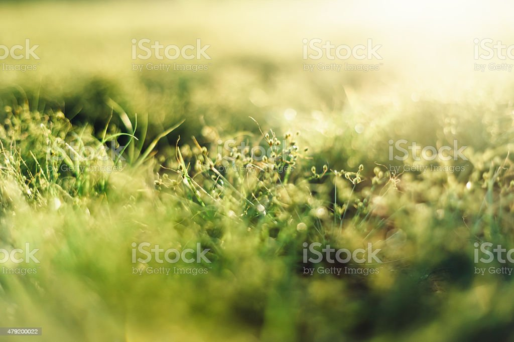 Grass Green Close-up In Meadow Sunshine No. 12 stock photo