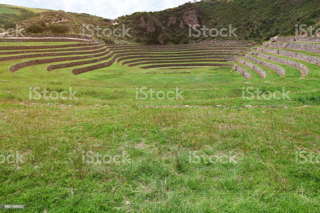 Campo De Hierba Verde En Terrazas Del Inca Foto De Stock Y