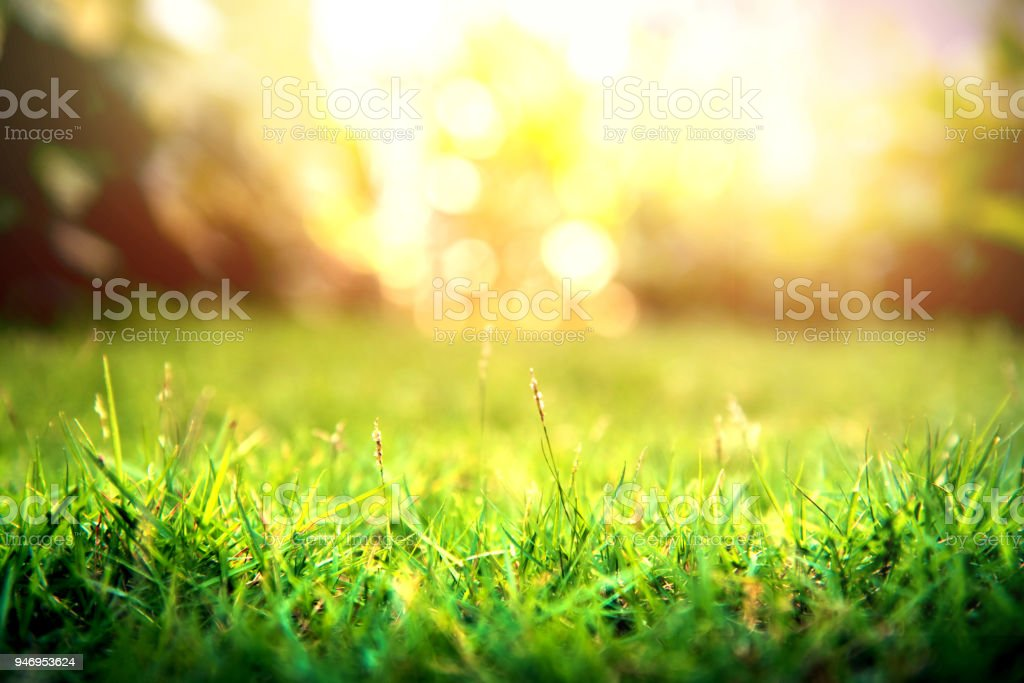 Grass green forest on spring sunset light background.