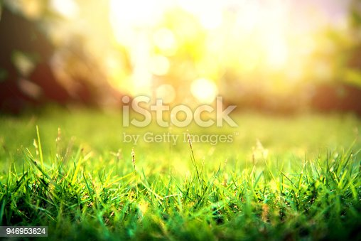 istock Grass green forest on spring sunset light background. 946953624