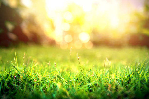 Grass green forest on spring sunset light background. stock photo