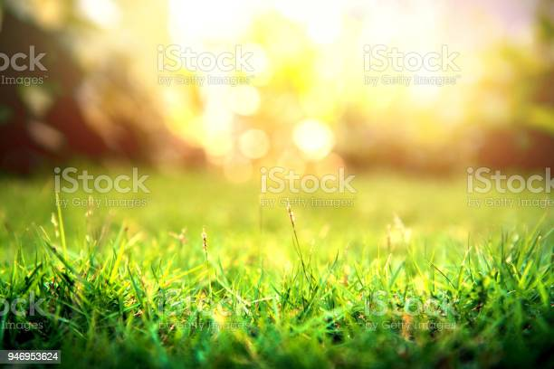 Photo of Grass green forest on spring sunset light background.