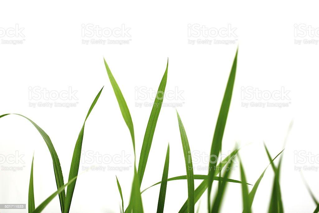 grass green royalty-free stock photo