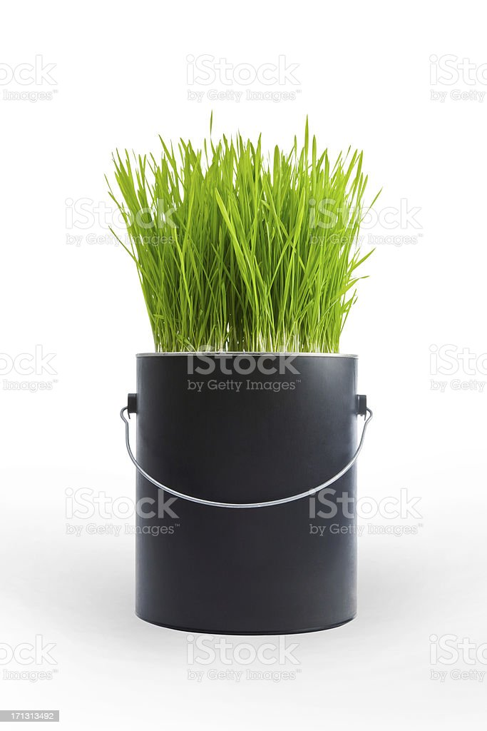 Grass Growing In A Black Plastic Paint Can Stock Photo Download Image Now Istock