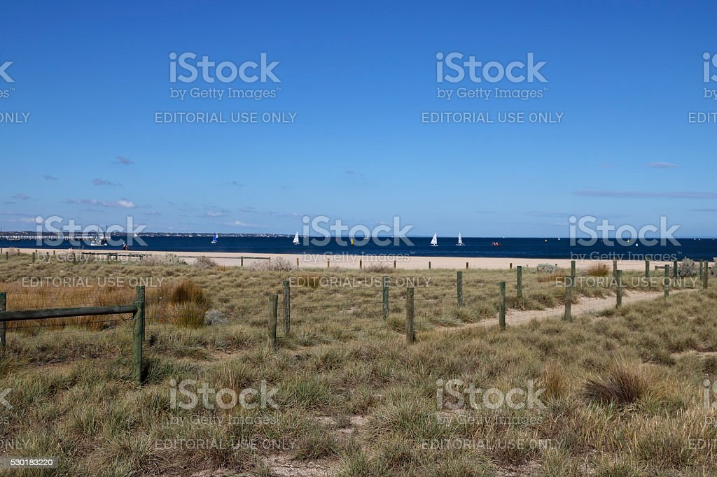 Grass Growing in Sand at Beach in Conservation Area stock photo