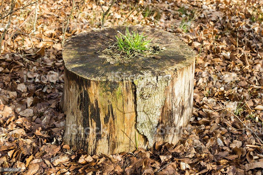 Grass growing on tree stump stock photo