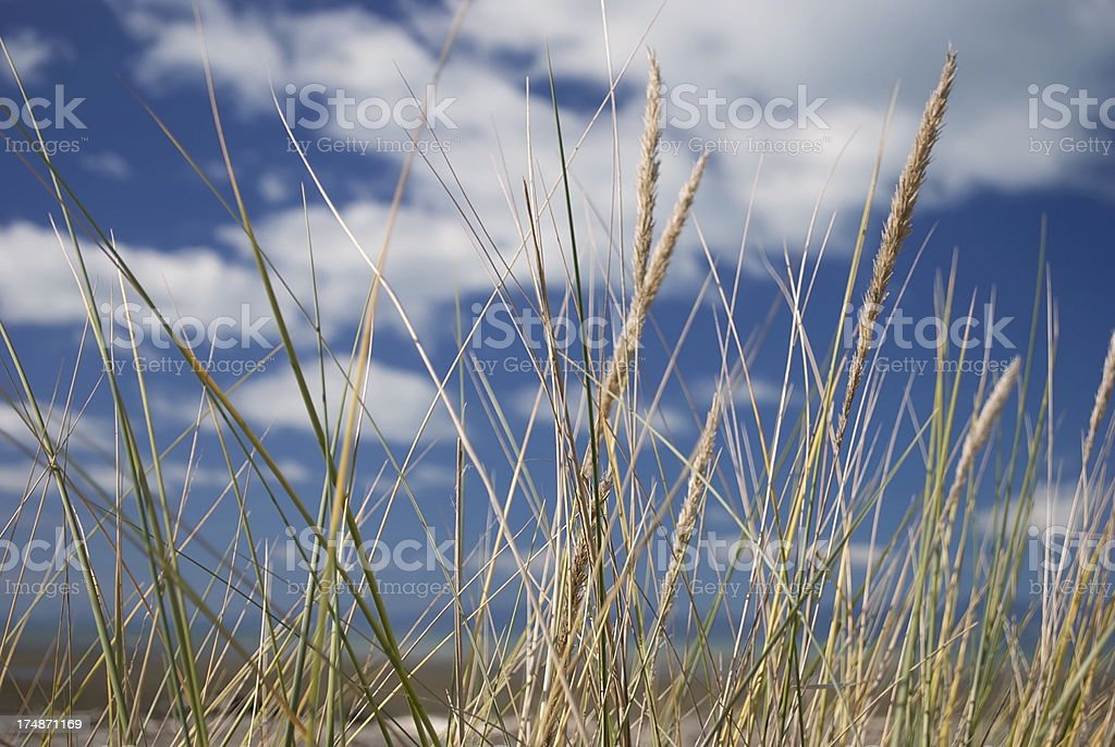Grass Heads and Sky royalty-free stock photo