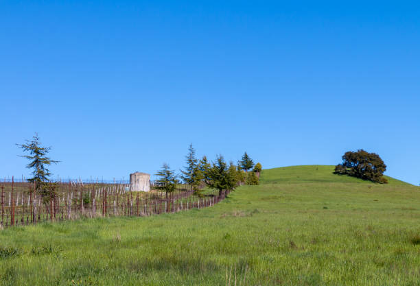 Grass hill vineyard left stock photo