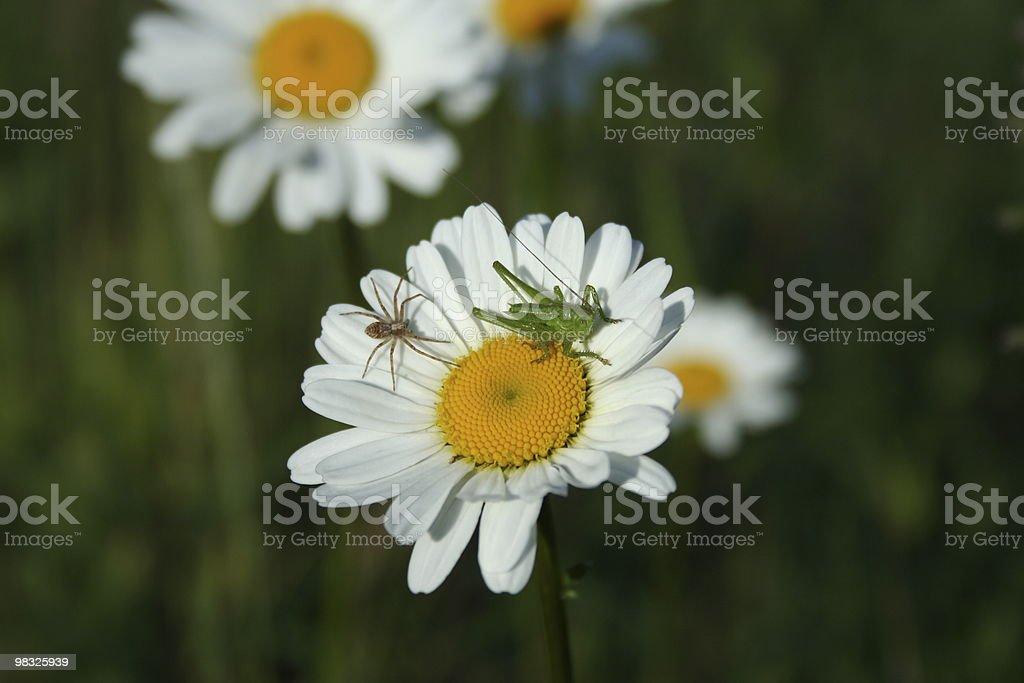 grass hopper flower royalty-free stock photo