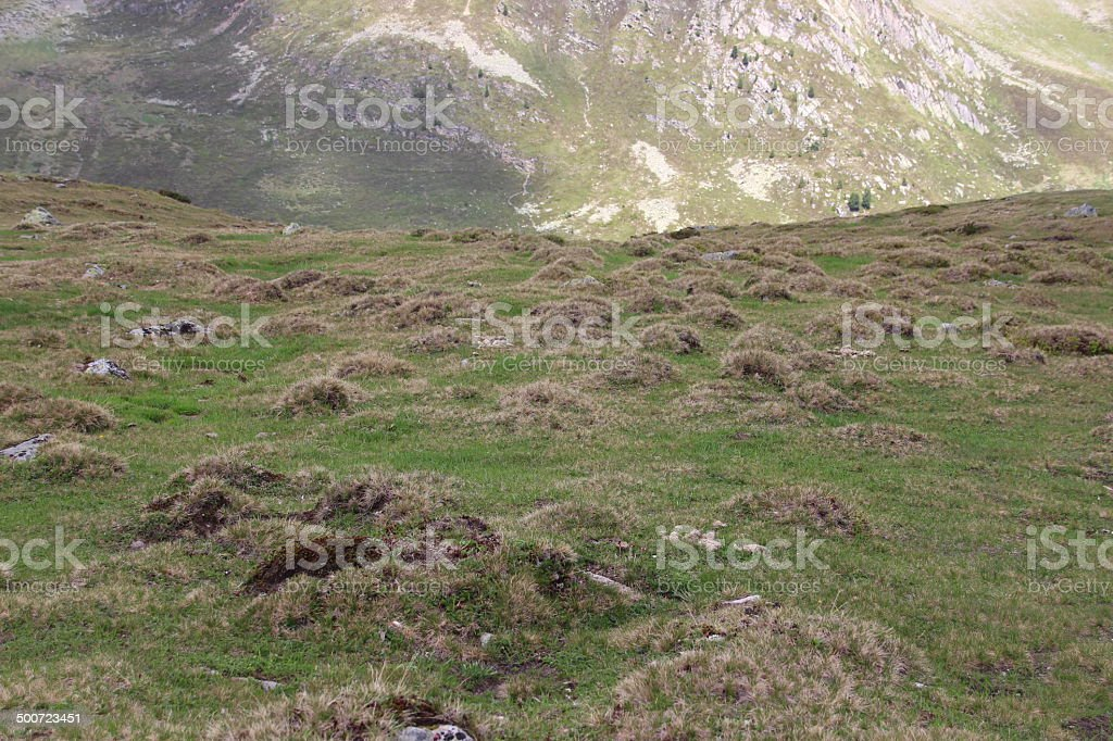 Grass Humps, Hirschebensee, Kühtai, Tyrol, Austria stock photo