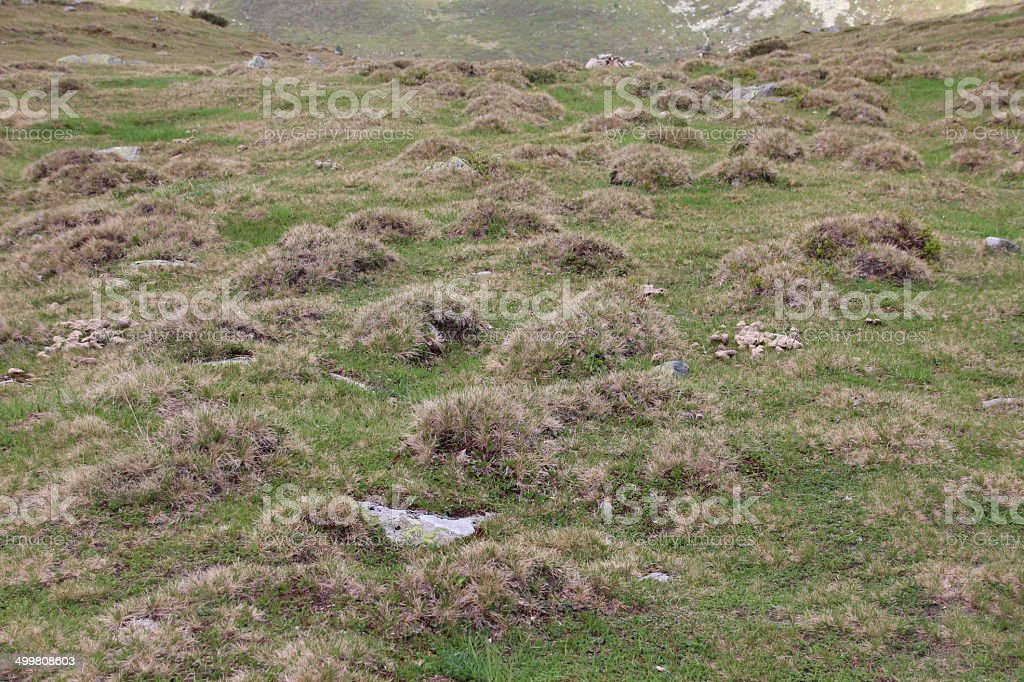 Grass Humps Small Hills stock photo