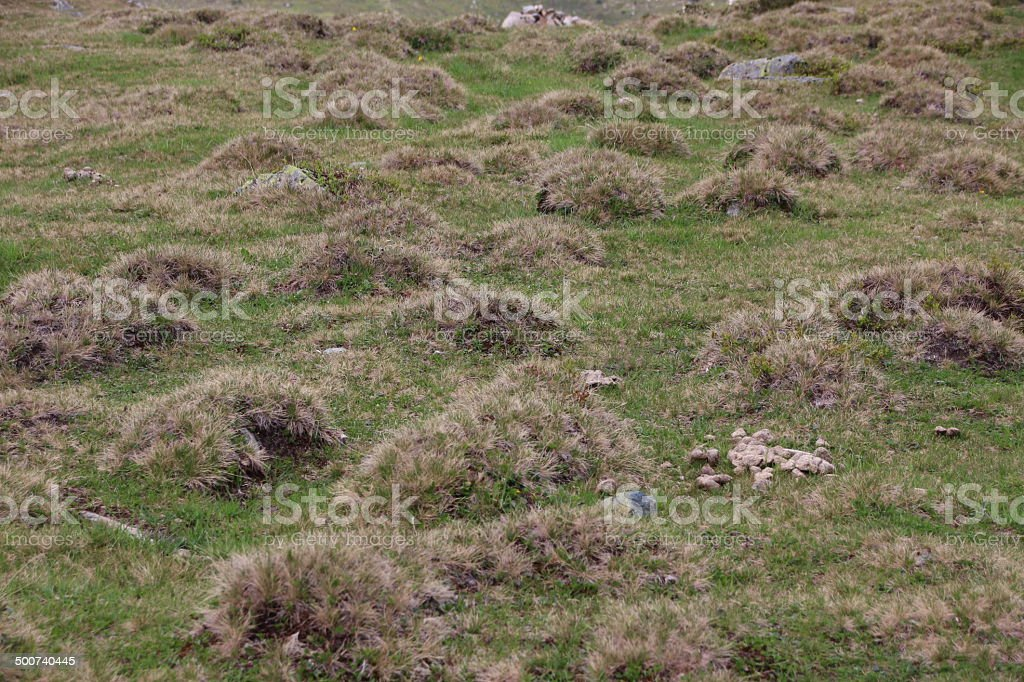 Grass Humps, Small Hills stock photo