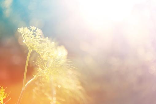 grass in a field in the sunshine