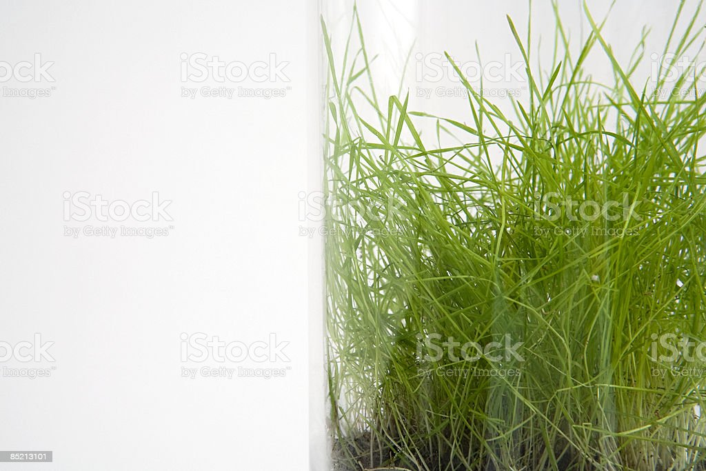 Grass in a jar royalty-free stock photo