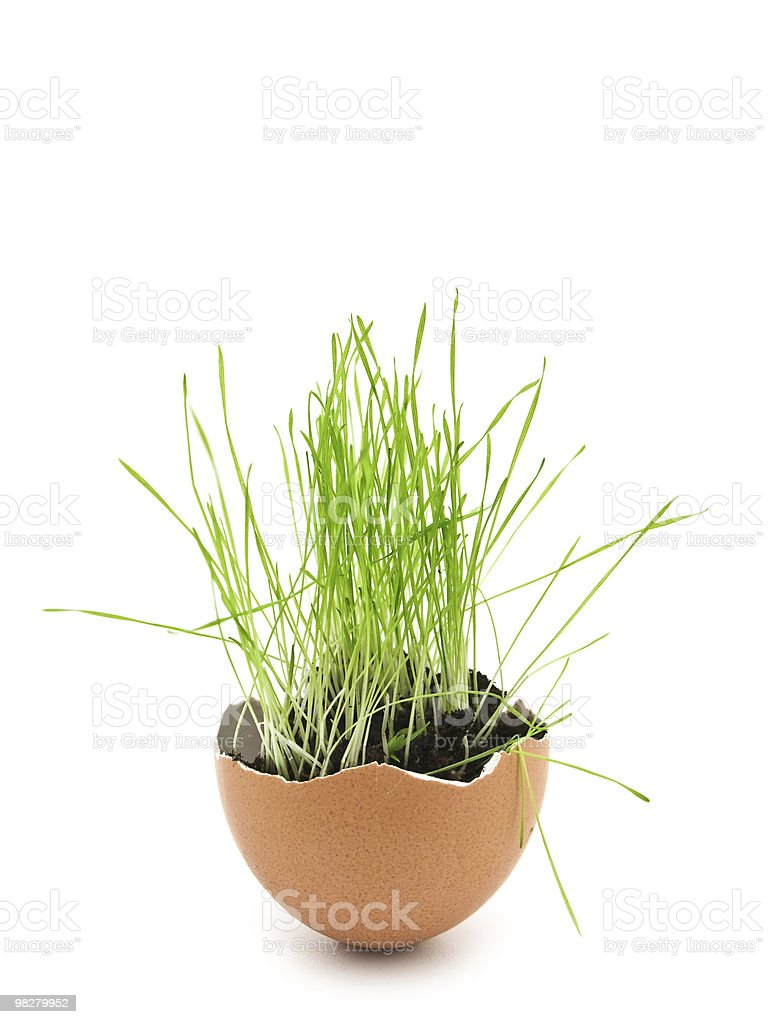 grass in egg shell royalty-free stock photo