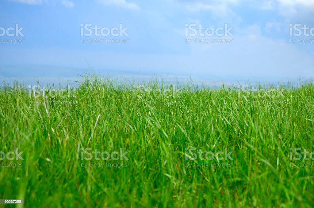 grass in hill royalty-free stock photo