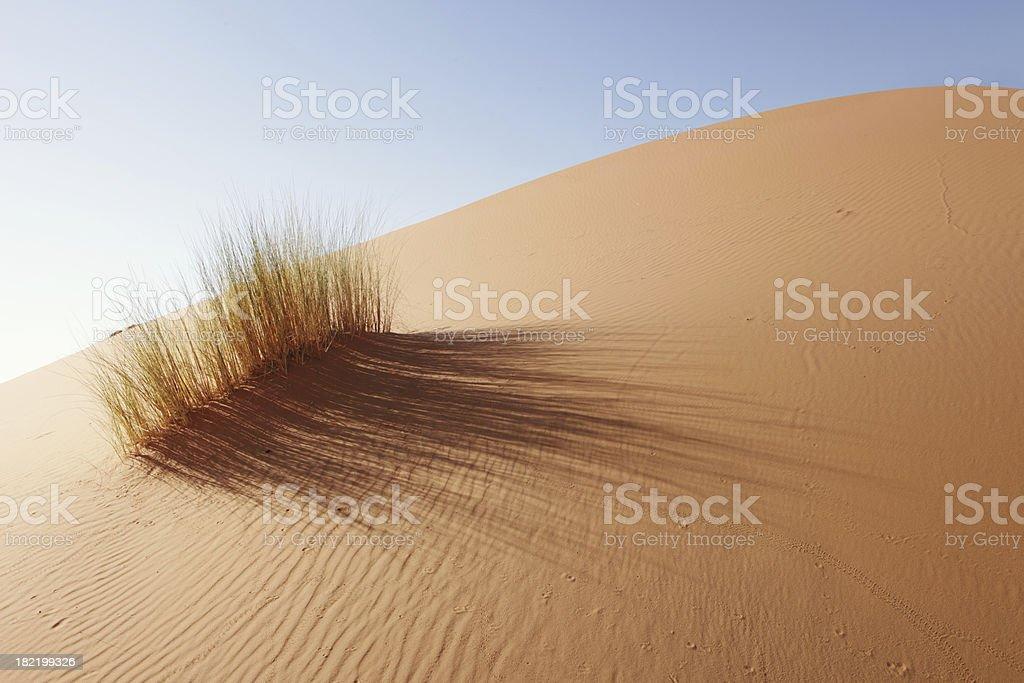 Grass in Sahara Desert, Merzouga, Morocco stock photo