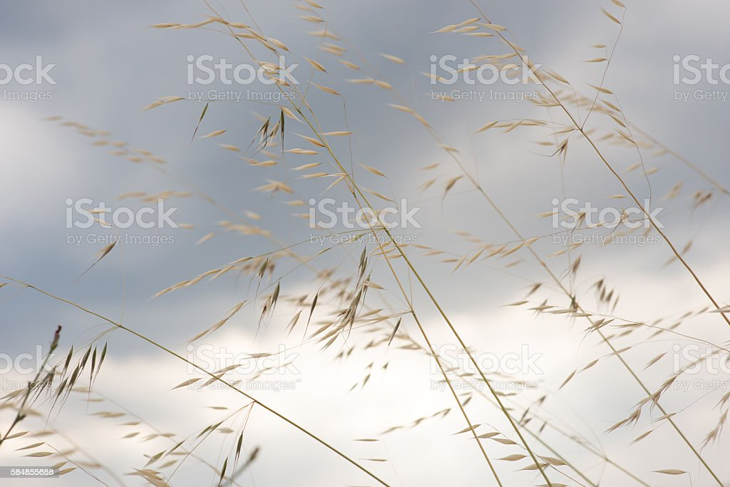 Grass in sand dunes and sky is back stock photo