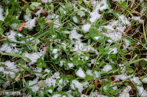 639394370 istock photo grass in snow and ground / Conceptual photo of spring going after winter. Grass growing through snow / green grass with snow in winter season / Young wheat under snow 1192732123