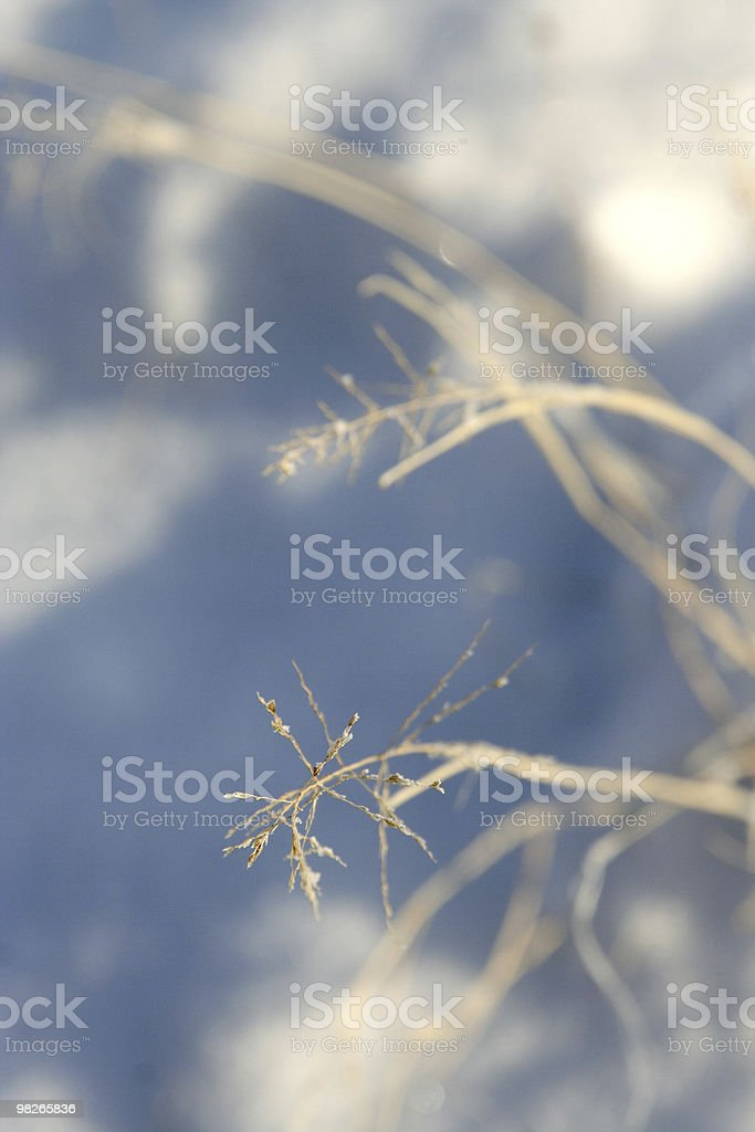 Grass in snow soft macro royalty-free stock photo