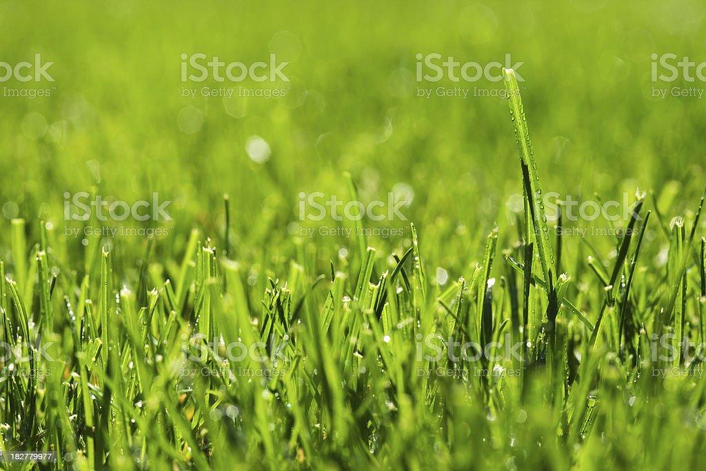 Grass in spring morning stock photo