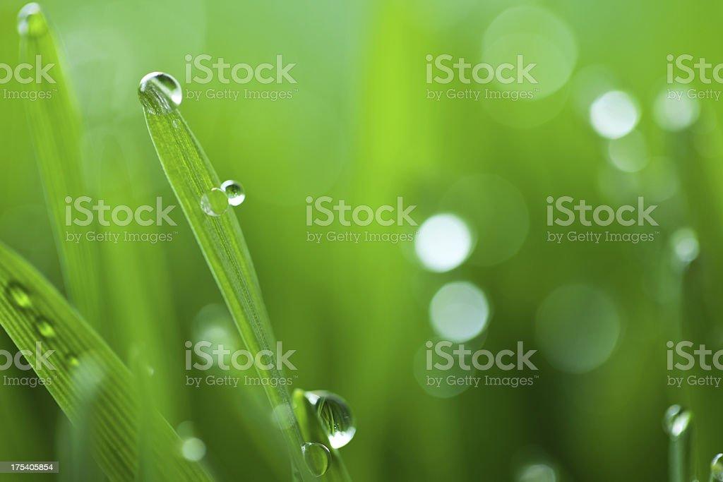 Grass in spring stock photo