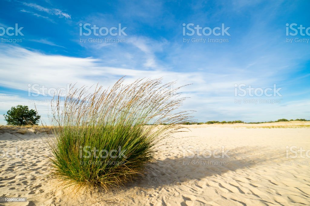 gras in de duinen van het nationaal park Loonse en Drunense Duinen, Nederland foto