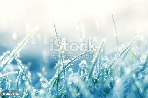 Grass in the frost. Frost on the grass in the morning sun.Winter plant background in cold blue tones. Grass background in gentle pastel colors.November and December. Late Autumn. Winter time