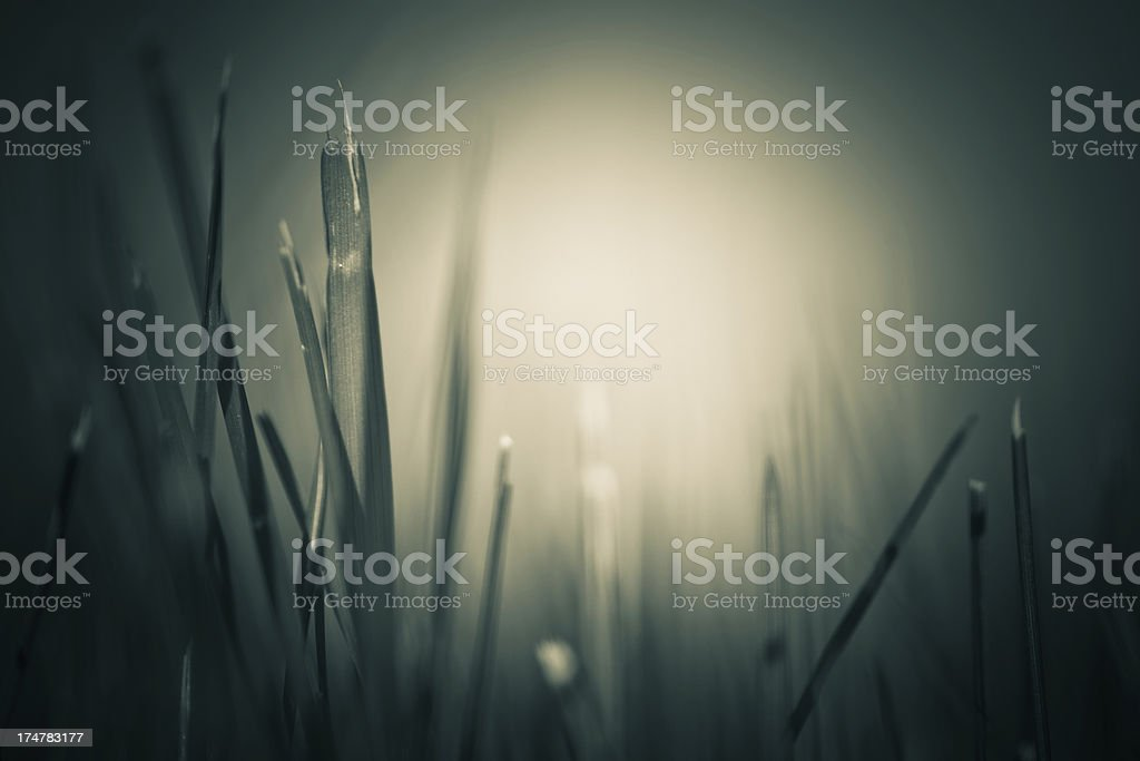 grass in the shade royalty-free stock photo