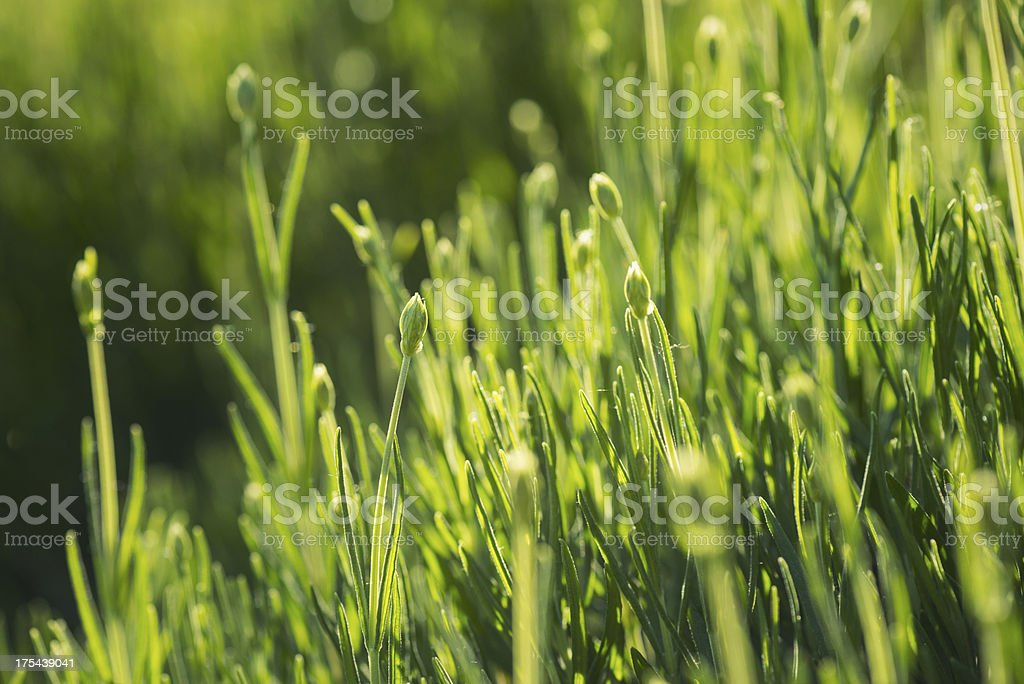 Grass in the sunlight royalty-free stock photo