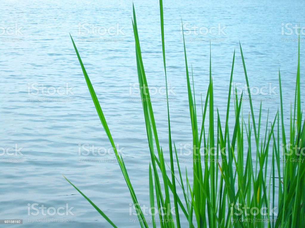 Grass in the Water royalty-free stock photo