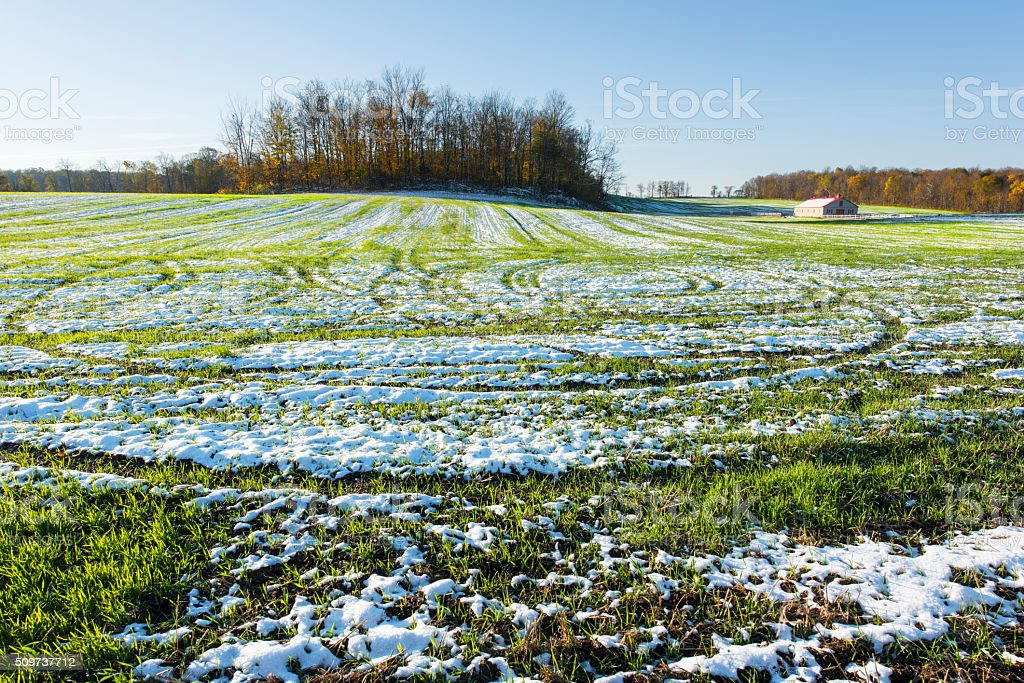 Grass in Winter stock photo