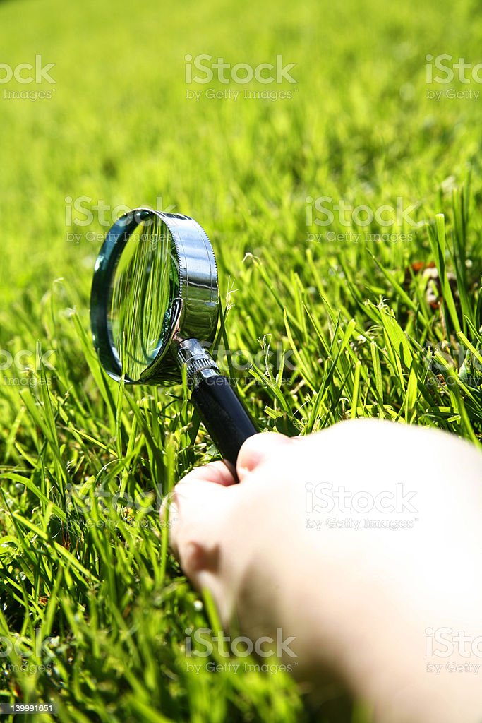 Grass Inspect royalty-free stock photo