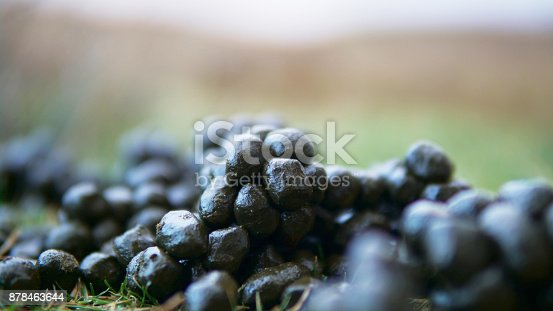 Grass Inspired Produce Stock Photo & More Pictures of Abstract