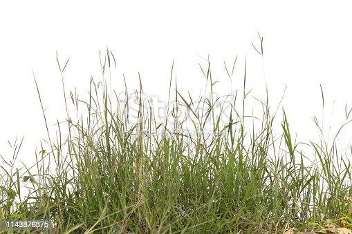 istock Grass isolated on white background. 1143876875